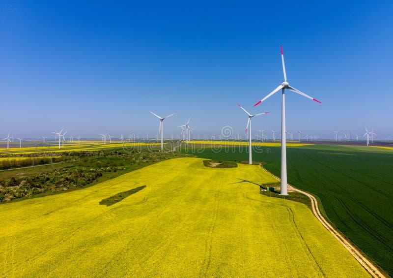 Flyg- sikt av eolian turbiner Rapeseedf?lt i blom f?rnybar energi arkivbild