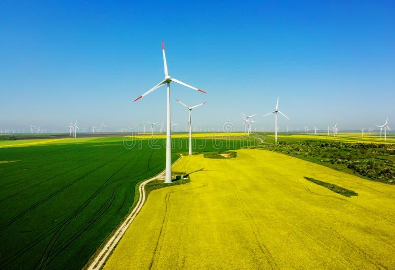 Flyg- sikt av eolian turbiner Rapeseedf?lt i blom f?rnybar energi arkivfoton