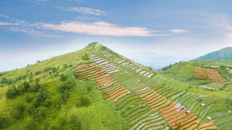 Flyg- sikt av jordbruksmark i den Dieng platån fotografering för bildbyråer
