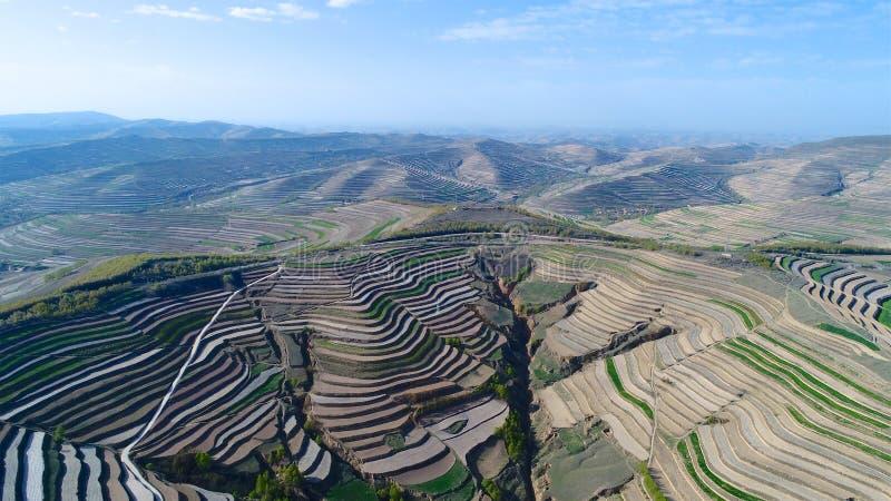 Flyg- sikt av kullar för lantgårdfält, terrasserad dal med massiv agricutlure royaltyfri foto