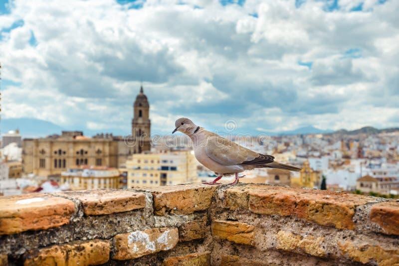 _flyg- sikt av Malaga i en härlig sommar dag, Spanien arkivbild