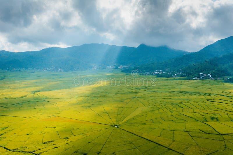 Flyg- sikt av risfält för Lingko spindelrengöringsduk medan solljuspiercing till och med moln till jordningen royaltyfri fotografi