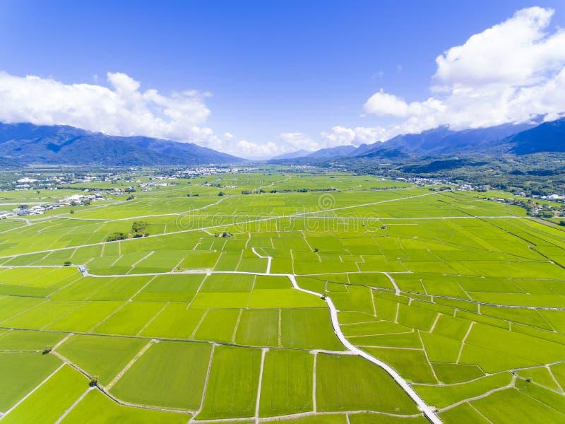 Flyg- sikt av risfältdalen taiwan royaltyfri fotografi