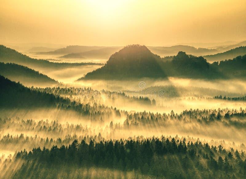 Flyg- sikt av skogen som döljas i morgondimma royaltyfria bilder
