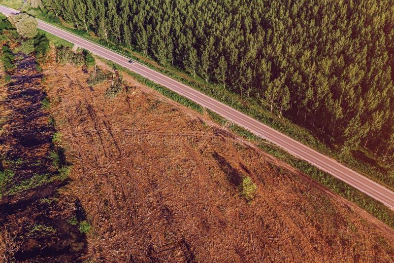 Flyg- sikt av vägen mellan poppelskogen och kalhuggit område arkivbild
