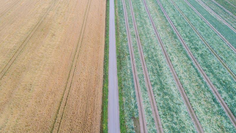 Flyg- sikt av vägen och gräsplanen, gula fält arkivfoto