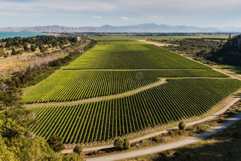 Flyg- sikt av vingårdar på den Wairau dalen arkivfoto