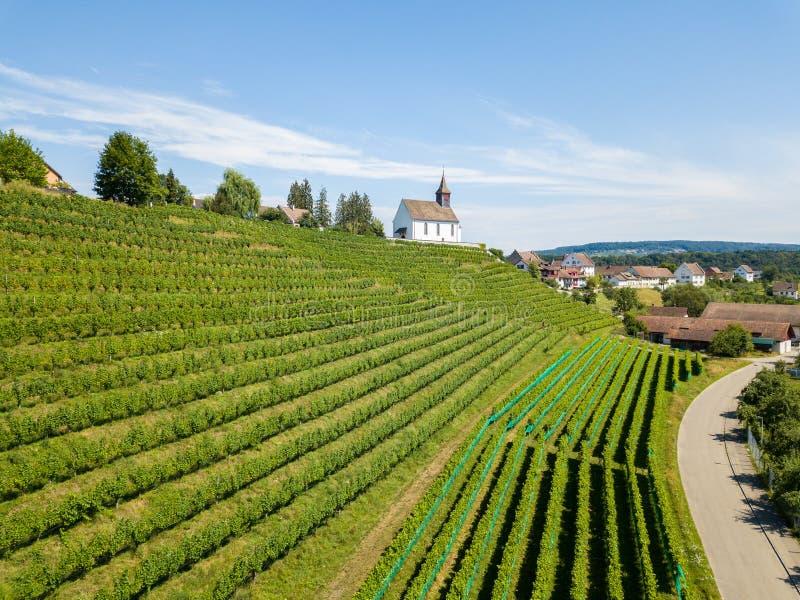 Flyg- sikt av vingårdarna royaltyfri bild