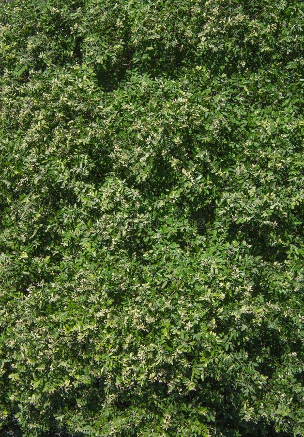 Flyg- sikt för grön bladlövruska av träd orsaka härlig textur arkivbilder