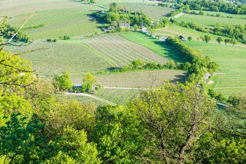 Flyg- sikt för vingårdar royaltyfria bilder