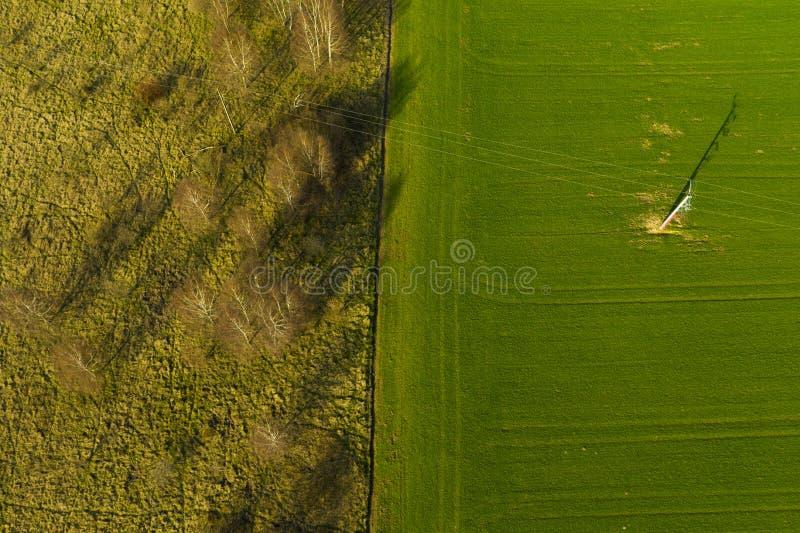 Flyg- sikt på delat område av det gröna jordbruks- fältet och ängen med busken och träd fotografering för bildbyråer