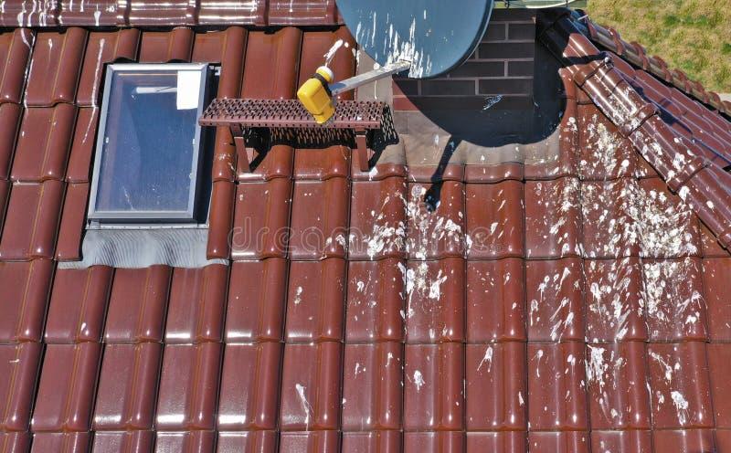 Flyg- sikt på det korrugerade taket som är smutsigt med massivt nummer av fågelspillning Tak med orent tegelplattaproblem royaltyfria bilder