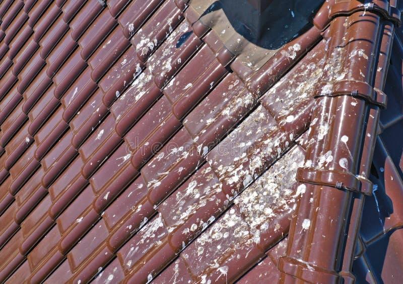 Flyg- sikt p? det korrugerade taket som ?r smutsigt med massivt nummer av f?gelspillning Tak med orent tegelplattaproblem arkivfoto