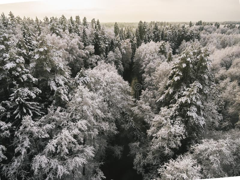 Flyg- sikt p? floden p? vintertiden Naturligt vinterlandskap fr?n luft Skog under sn? a vintertiden royaltyfri fotografi