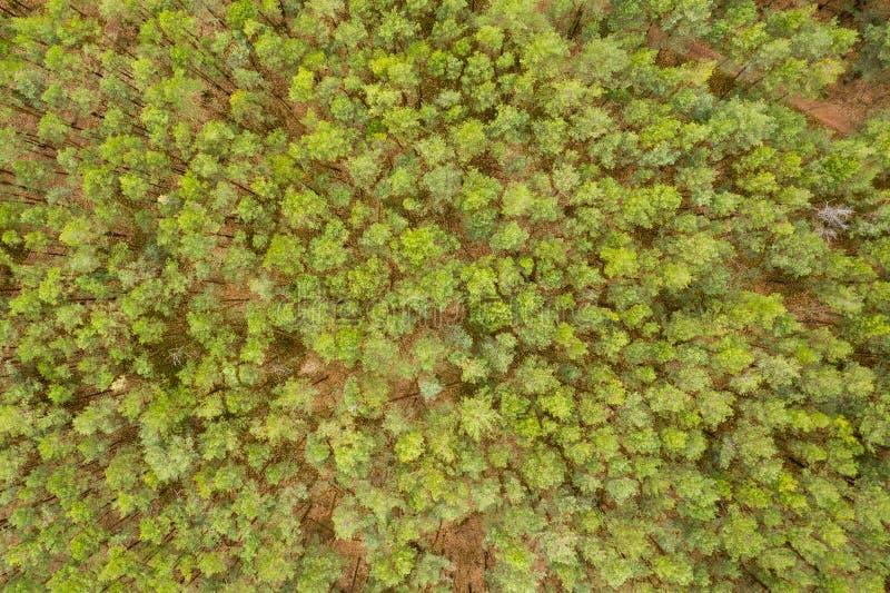 Flyg- skog för bästa sikt, textur av skogsikten från över royaltyfri bild