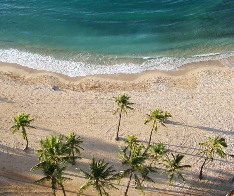 flyg- strandpalmträdsikt royaltyfri bild