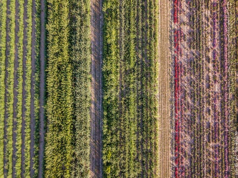 Flyg- surrbild av fält med olik skördtillväxt - polyculture och permaculture royaltyfria foton