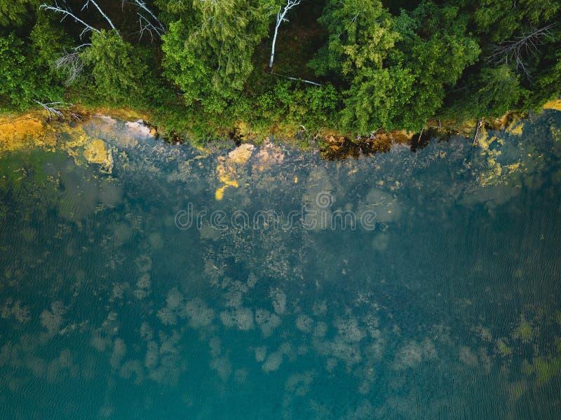 Flyg- surrfoto av trädgamla käringar som växer i tourquoisevatten, Ryssland royaltyfri fotografi