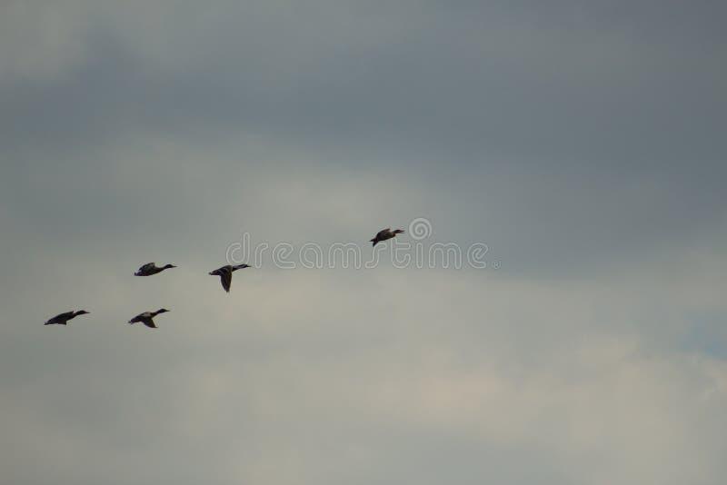 Flyga änder fotografering för bildbyråer