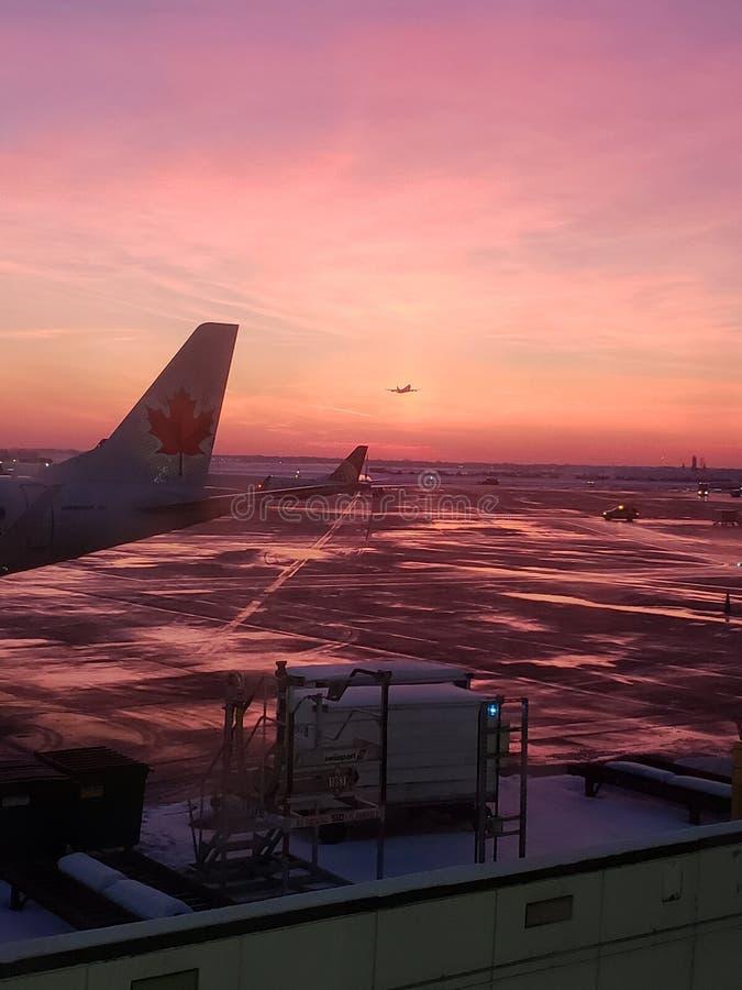 Flyga av in i solnedgången royaltyfri foto