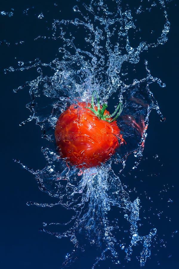 Flyga den mogna tomaten i vattenfärgstänk arkivbild