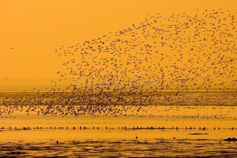 flyga för fåglar arkivfoto