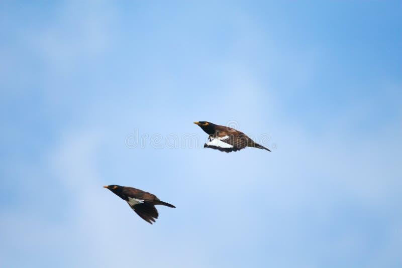 flyga för fåglar royaltyfri bild
