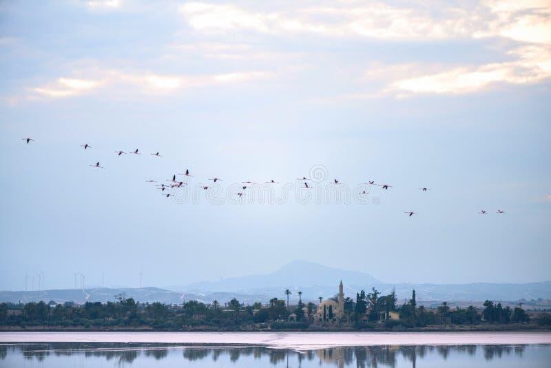 Flyga flamingo ovanför den Larnaca Salt-sjön och den Hala Sultan Tekke moskén, Cypern royaltyfri fotografi