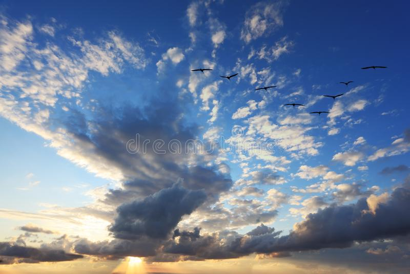 Flyga flocken av flyttfåglar royaltyfria bilder
