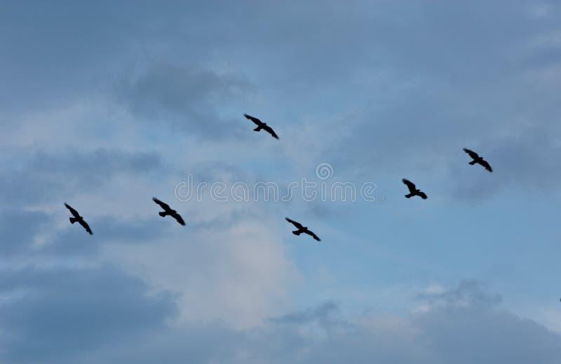 Flyga fritt i himlen arkivbild