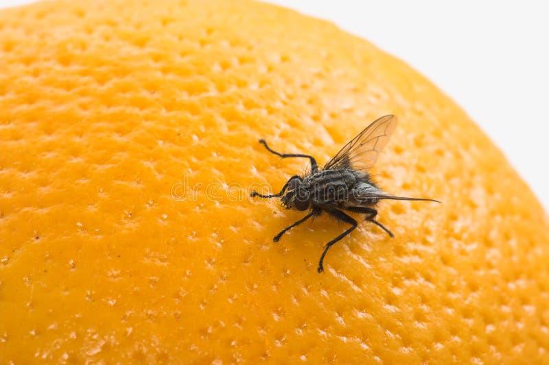flyga frukt fotografering för bildbyråer