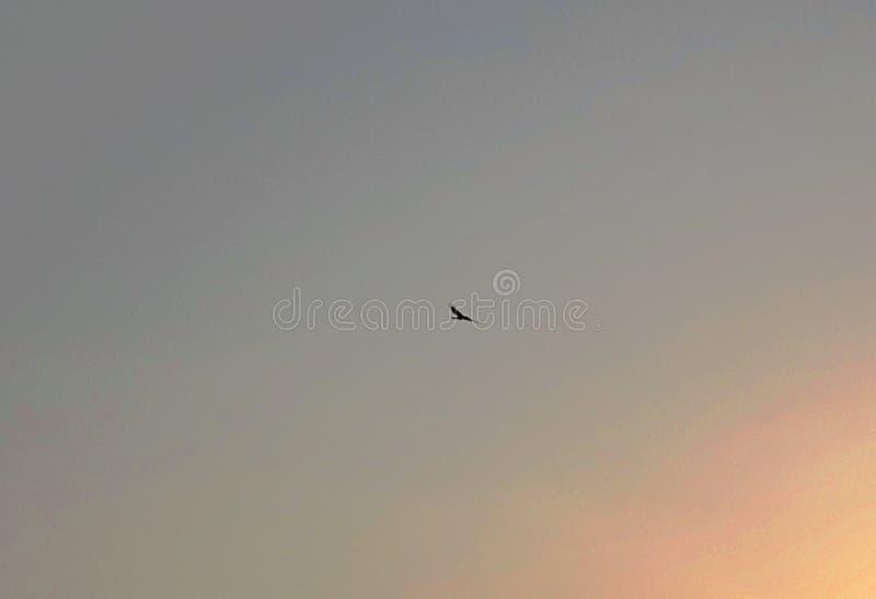Flyga höjdpunkten i himmel royaltyfria foton