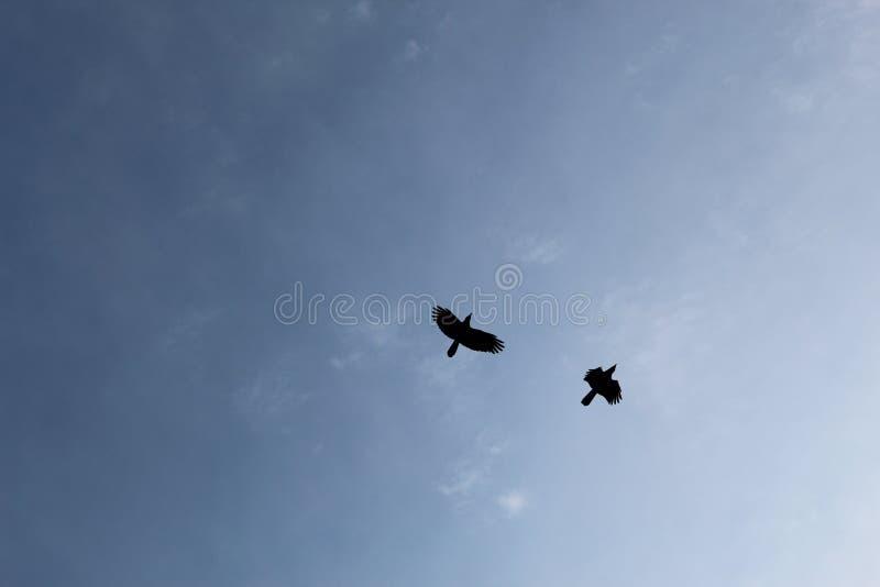 Flyga med fred royaltyfri bild