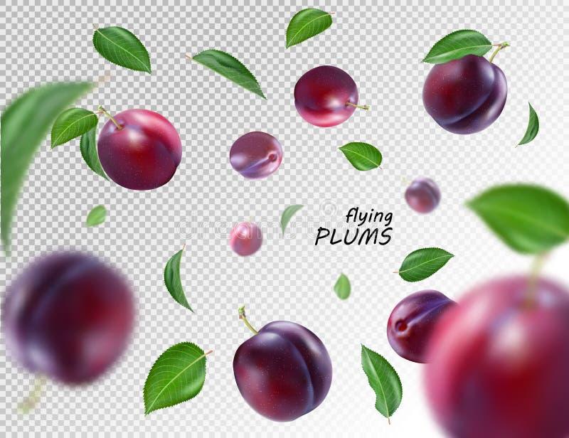 Flyga purpurfärgade plommoner på genomskinlig bakgrund Realistisk kvalitets- vektor EPS10 stock illustrationer