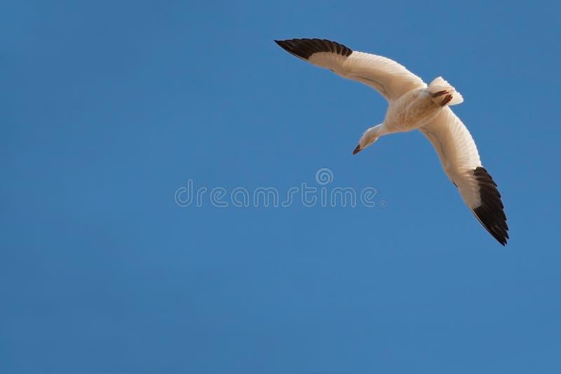 flyga solo arkivfoto