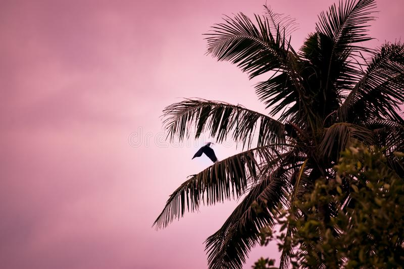 Flyga som är korpsvart och palmtree på aftonljus arkivfoton
