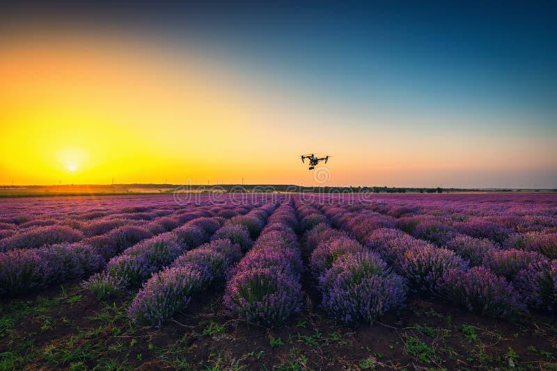 Flyga surr- och lavendelfältet, solnedgångskott arkivbilder