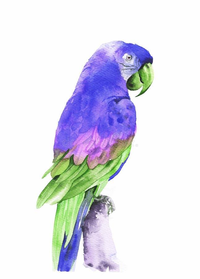 Flyga tropiska papegojamunkhättor Dragen illustration f?r vattenf?rg hand arkivbilder