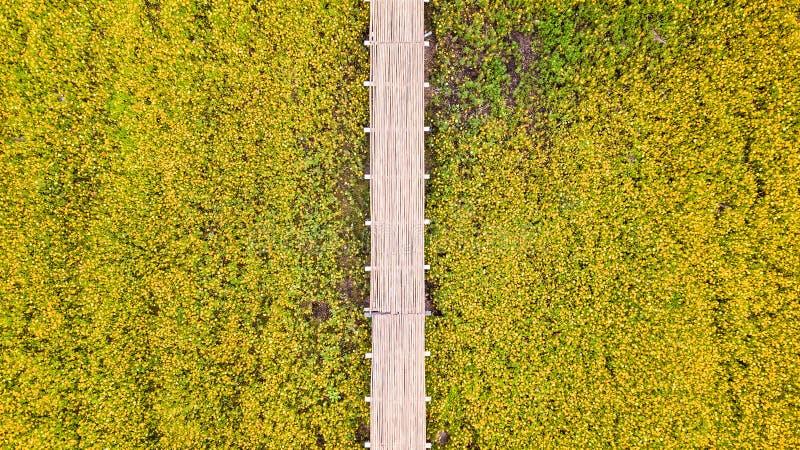 Flygbilder av den gula kosmosblomman med gångbanan royaltyfri fotografi