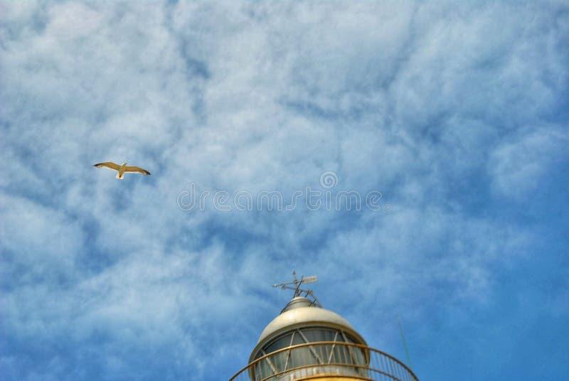 flyget av fågeln royaltyfria bilder