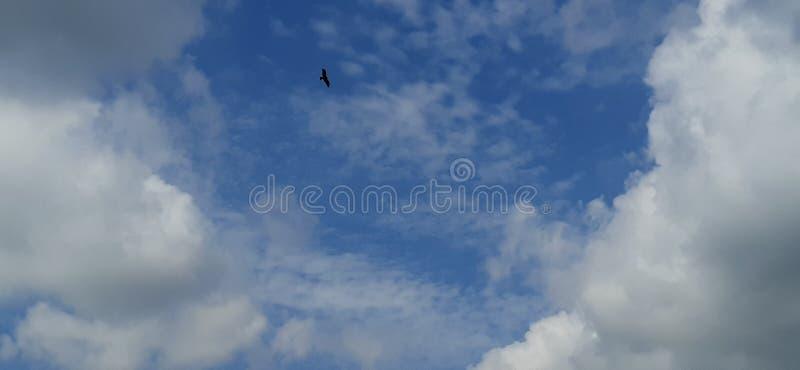 Flyget arkivfoto