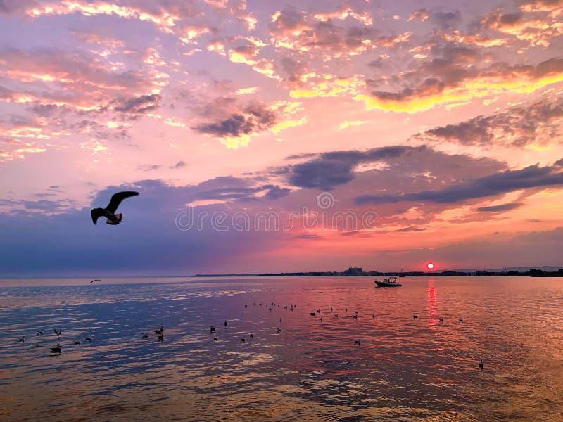 Flygfågel och solnedgång över havet Violett och rosa himmel arkivbild