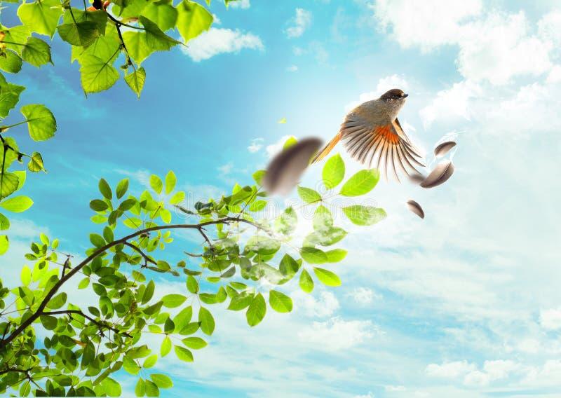 Flygfågeln arkivfoto