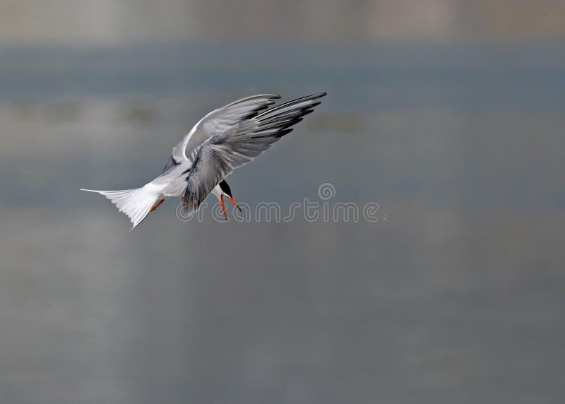 Flygfåglar arkivbilder