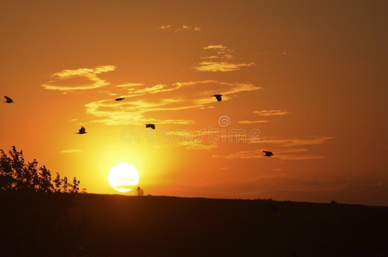 Flygfåglar på bakgrunden av en sommarsolnedgång arkivbild