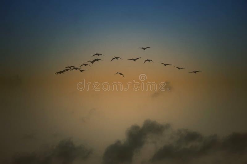 Flygfåglar på blått och en guld- himmel tapetserar royaltyfri foto