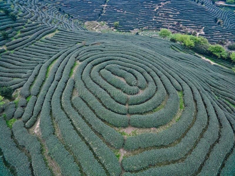 Flygfotografering överst av landskapet för bergteträdgård royaltyfri bild