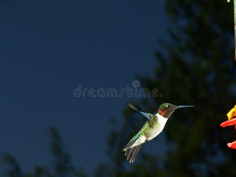 flyghummingbird stock illustrationer
