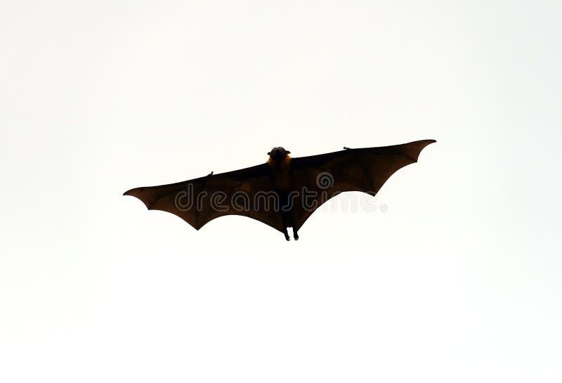 Flyghundkapplöpning arkivfoto