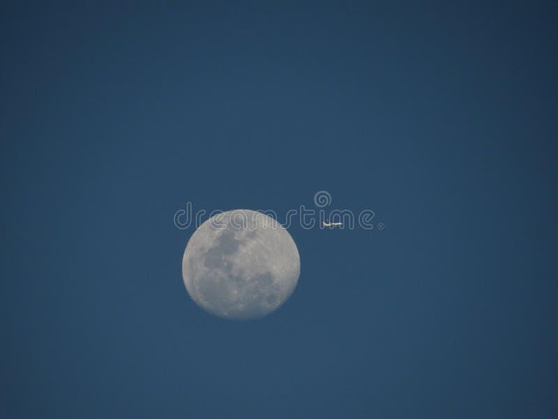 Flygmåne arkivbilder